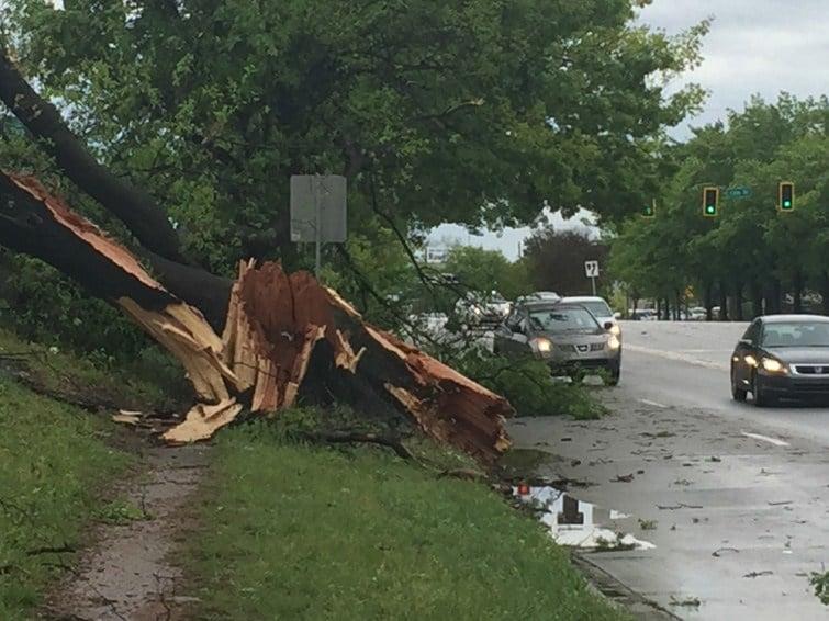 Tree down on Walton Way at 13th St (WFXG)