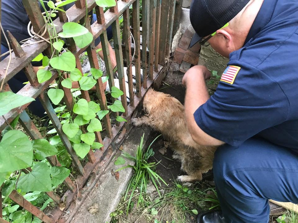 Augusta firefighters rescue dog from gate (source: Facebook / Augusta Richmond County EMA)