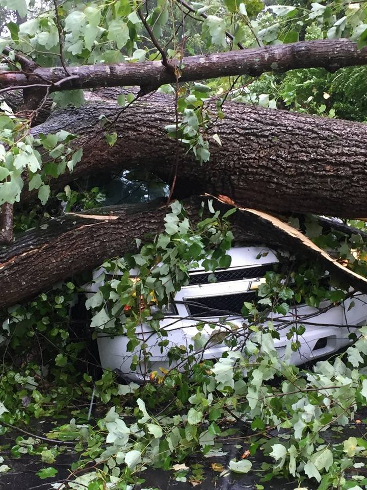 Tree on North Augusta Public Safety Vehicle (source: North Augusta Public Safety / Facebook)