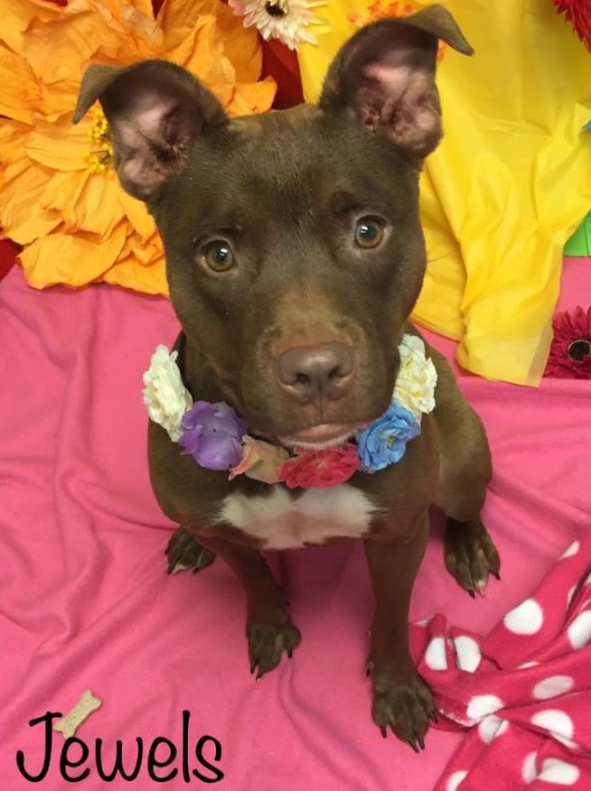 Jewels ( Source:Augusta Animal Services)