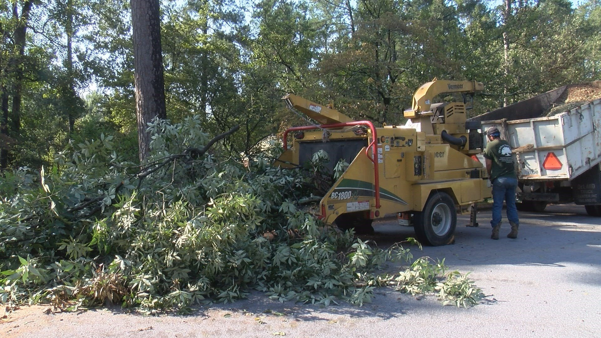 How to protect yourself from residential tree service scams (wfxg)