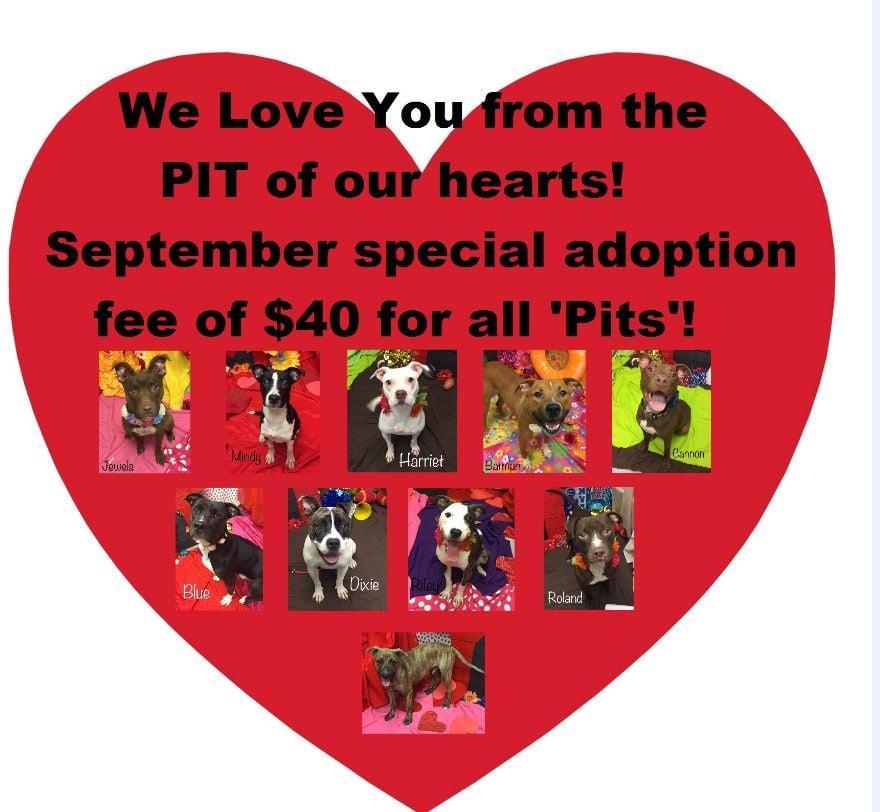 Source: Augusta Animal Services