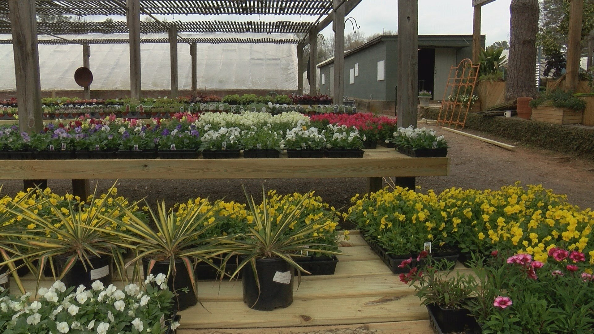 Flowers and plants sit available for sale at Bedford Greenhouses in Augusta, GA (WFXG)