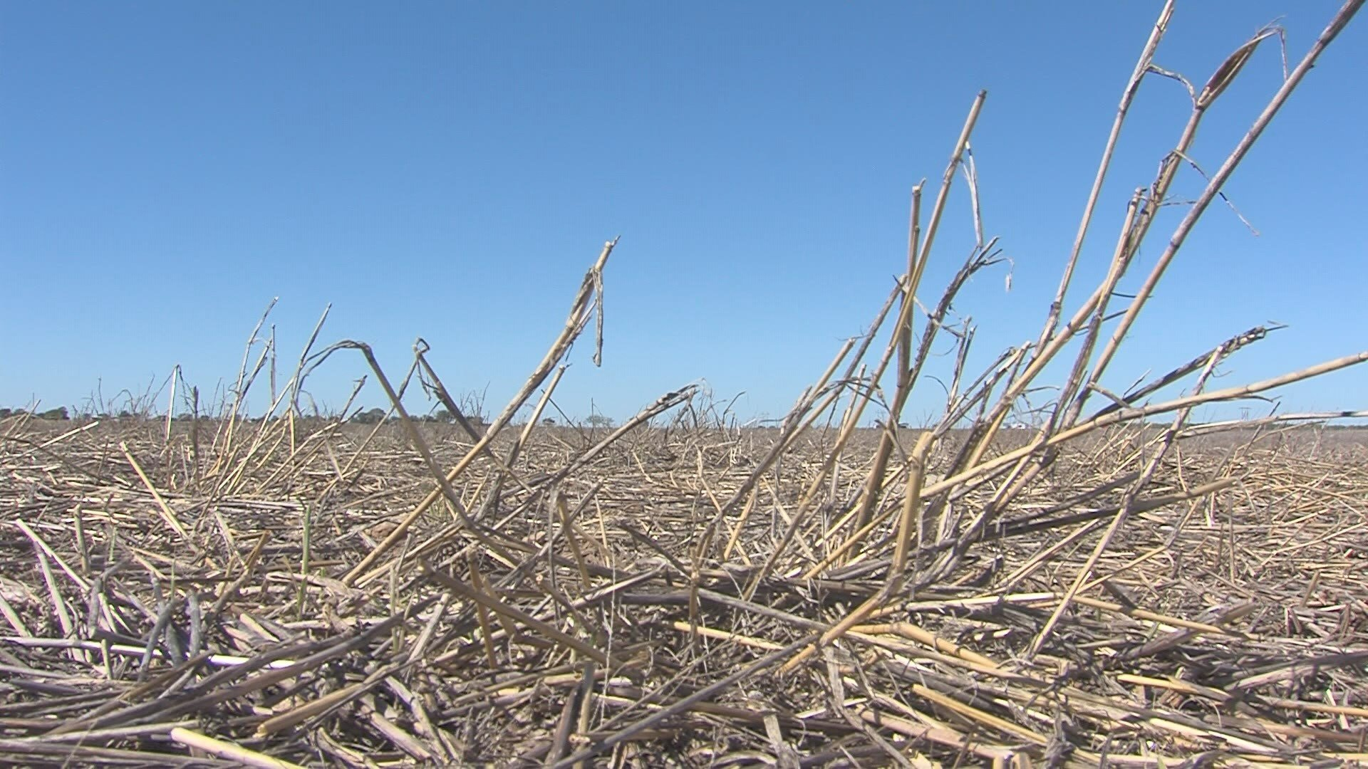 Drought (WFXG)