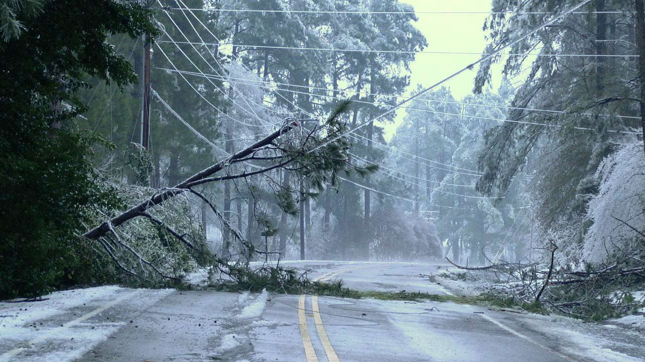 A tree fell on a power line in Aiken County. (Source: Brandon Mullis)