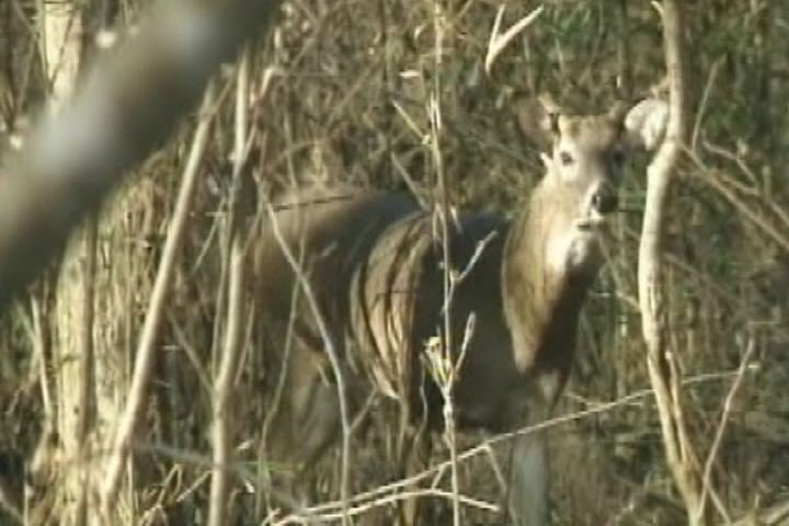 South carolina dnr hears public input on proposed deer for Sc dnr fishing license